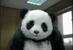 Portrait de panda